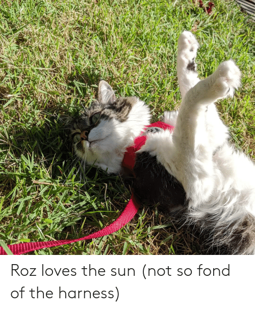 Roz: Roz loves the sun (not so fond of the harness)