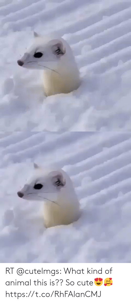 cute: RT @cutelmgs: What kind of animal this is??   So cute😍🥰 https://t.co/RhFAlanCMJ