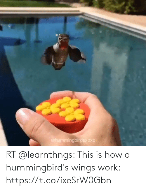 Wings: RT @learnthngs: This is how a hummingbird's wings work: https://t.co/ixeSrW0Gbn