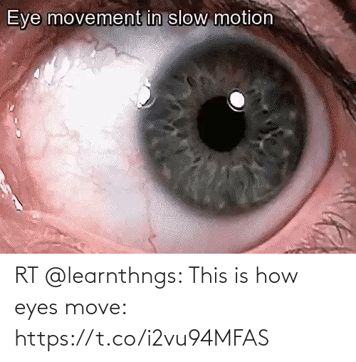 eyes: RT @learnthngs: This is how eyes move: https://t.co/i2vu94MFAS