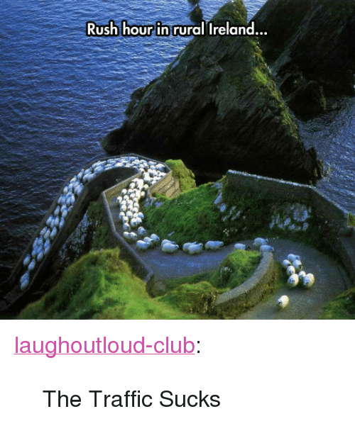 "Club, Rush Hour, and Traffic: Rush hour in rural Ireland  .. <p><a href=""http://laughoutloud-club.tumblr.com/post/173472978093/the-traffic-sucks"" class=""tumblr_blog"">laughoutloud-club</a>:</p>  <blockquote><p>The Traffic Sucks</p></blockquote>"