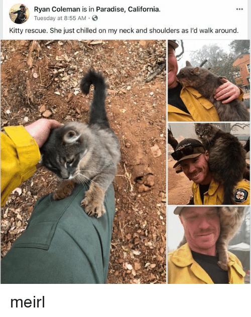 chilled: Ryan Coleman is in Paradise, California  yTuesday at 8:55 AM.S  Kitty rescue. She just chilled on my neck and shoulders as l'd walk around meirl
