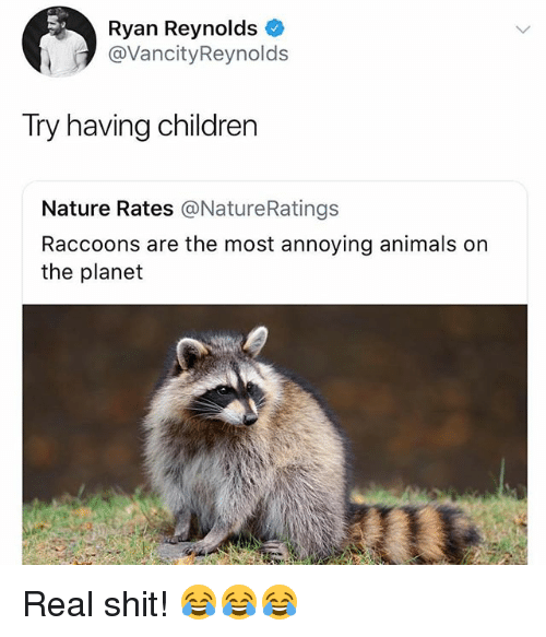 Animals, Children, and Memes: Ryan Reynolds  @VancityReynolds  Try having children  Nature Rates @NatureRatings  Raccoons are the most annoying animals on  the planet Real shit! 😂😂😂