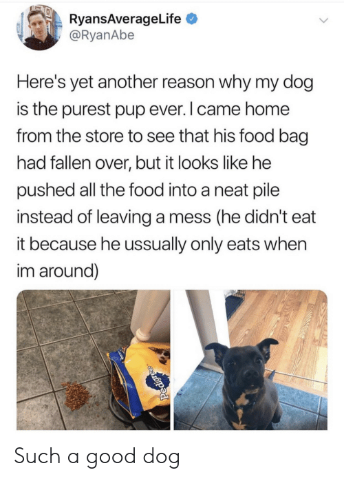 Food, Good, and Home: RyansAverageLife  @RyanAbe  Here's yet another reason why my dog  is the purest pup ever. I came home  from the store to see that his food bag  had fallen over, but it looks like he  pushed all the food into a neat pile  instead of leaving a mess (he didn't eat  it because he ussually only eats when  im around)  Pedigree Such a good dog