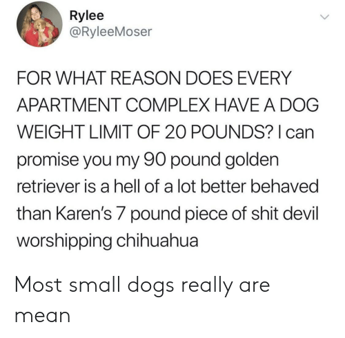 chihuahua: Rylee  @RyleeMoser  FOR WHAT REASON DOES EVERY  APARTMENT COMPLEX HAVE A DOG  WEIGHT LIMIT OF 20 POUNDS? can  promise you my 90 pound golden  retriever is a hell of a lot better behaved  than Karen's 7 pound piece of shit devil  orshipping chihuahua Most small dogs really are mean