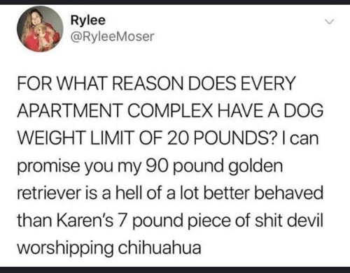 Chihuahua, Complex, and Shit: Rylee  @RyleeMoser  FOR WHAT REASON DOES EVERY  APARTMENT COMPLEX HAVEA DOG  WEIGHT LIMIT OF 20 POUNDS? I can  promise you my 90 pound golden  retriever is a hell of a lot better behaved  than Karen's 7 pound piece of shit devil  worshipping chihuahua