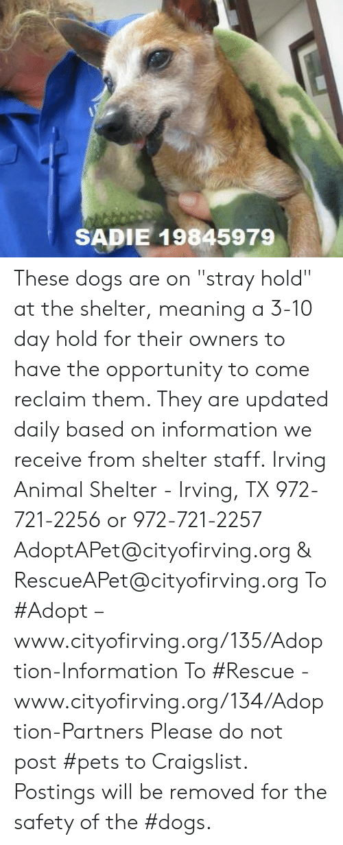 """Craigslist, Dogs, and Memes: SADIE 19845979 These dogs are on """"stray hold"""" at the shelter, meaning a 3-10 day hold for their owners to have the opportunity to come reclaim them. They are updated daily based on information we receive from shelter staff.  Irving Animal Shelter - Irving, TX 972-721-2256 or 972-721-2257 AdoptAPet@cityofirving.org & RescueAPet@cityofirving.org  To #Adopt – www.cityofirving.org/135/Adoption-Information   To #Rescue - www.cityofirving.org/134/Adoption-Partners   Please do not post #pets to Craigslist. Postings will be removed for the safety of the #dogs."""