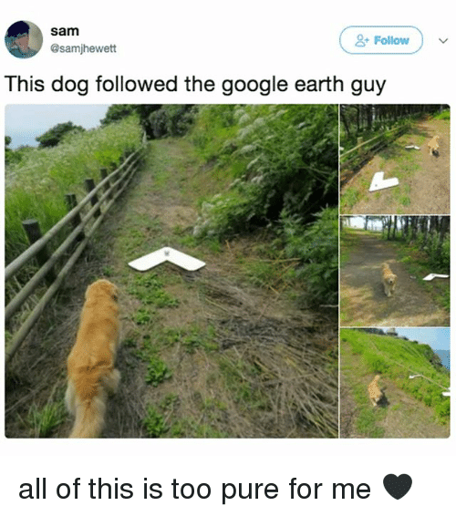 Google, Earth, and Google Earth: sam  +Follow  Follow  @samjhewett  This dog followed the google earth guy all of this is too pure for me 🖤