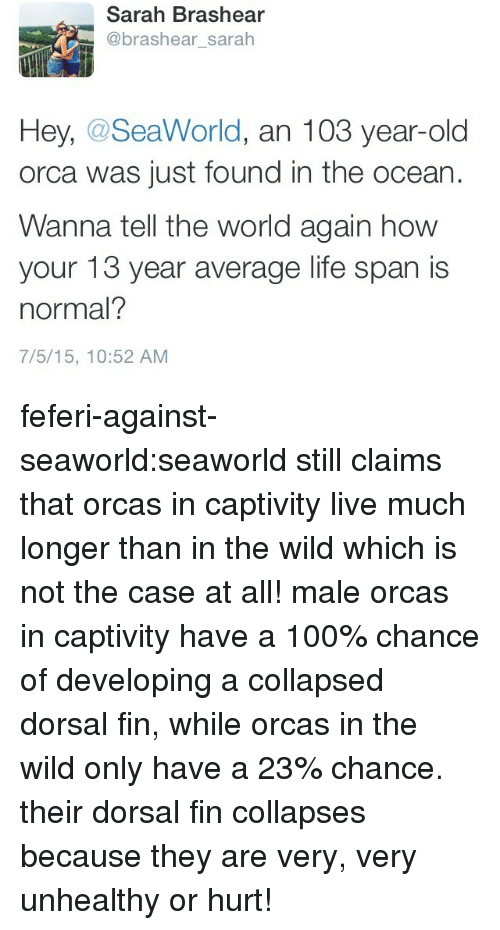 SeaWorld: Sarah Brashear  @brashear_sarah  Hey, @SeaWorld, an 103 year-old  orca was just found in the ocean  Wanna tell the world again how  your 13 year average life span is  normal?  7/5/15, 10:52 AM feferi-against-seaworld:seaworld still claims that orcas in captivity live much longer than in the wild which is not the case at all! male orcas in captivity have a 100% chance of developing a collapsed dorsal fin, while orcas in the wild only have a 23% chance. their dorsal fin collapses because they are very, very unhealthy or hurt!