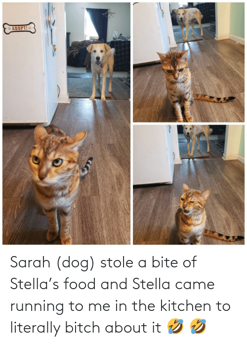 bite: Sarah (dog) stole a bite of Stella's food and Stella came running to me in the kitchen to literally bitch about it 🤣 🤣