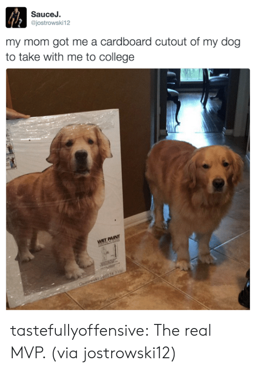 College, Tumblr, and Twitter: SauceJ.  @jostrowski12  my mom got me a cardboard cutout of my dog  to take with me to college tastefullyoffensive:  The real MVP. (via jostrowski12)