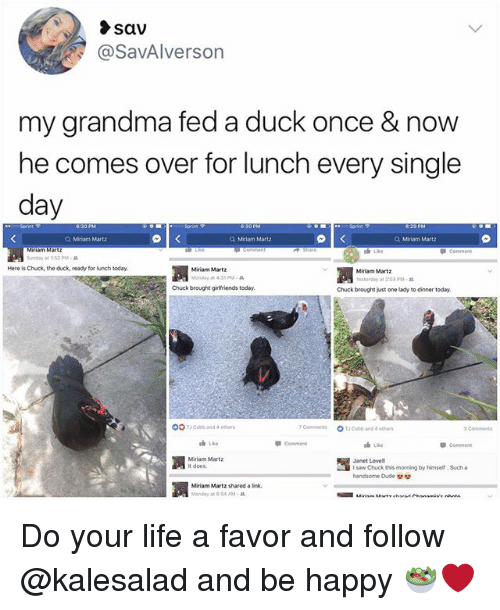 Dude, Grandma, and Life: sav  @SavAlverson  my grandma fed a duck once & now  he comes over for lunch every single  day  Q, Miriam Martz  Q Miriam Matz  Q Miriam Martz  S Like  Snay at 1:52 PM .  Here is Chuck, the duck, ready for lunch today  Miriam Martz  Monday at 4:35 PM  Miriam Martz  Yesherday at 2 03 PM-  Chuck brought girlfriends today  Chuck brought just one lady to dinner today.  OOTCobb and 4 othe  7cam merits  OT」Cobb and 4 eows  3Commets  油Like  Commen  Comment  Miriam Martz  it does.  15  houck this moming by hime. Sucha  Janet Lovell  handsome Dude  凋  Miriam Martz shared a link,  Monday at 6:54 AM . Do your life a favor and follow @kalesalad and be happy 🥗❤️