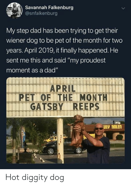 "Dad, Dank, and April: Savannah Falkenburg  @snfalkenburg  My step dad has been trying to get their  wiener dog to be pet of the month for two  years. April 2019, it finally happened. He  sent me this and said ""my proudest  moment as a dad""  PET OF THE MONTH  GATSBY REEPS Hot diggity dog"