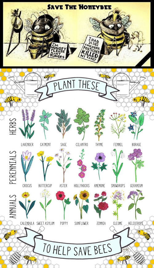 Children, Hungry, and Flowers: SAVE THE HONEYBEE  IHAD  34582  CHILDREN  PESTICIDES  KILLED  MY TAMILY  IM  HUNGRY  PLEASE  PLANT  FLOWERS   PLANT THESE  FENNEL  BORAGE  LAVENDER  CATMINT  SAGE  CILANTRO  THYME  CROCUS  BUTTERCUP  ASTER  SNOWDROPS  GERANIUM  HOLLYHOCKS ANEMONE  HELIOTROPE  POPPY  SUNFLOWER  ZINNIA  CLEOME  CALENDULA SWEET ASYLUM  10 HELP SAVE BEES  HMR  ANNUALS PERENNIALS  HERBS  ఇత