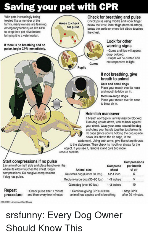 abdomen: Saving your pet with CPR  With pets increasingly being  treated like a member of the  family, many owners are learning  emergency techniques like CPR  to keep their pet alive before  bringing it to a veterinarian.  Check for breathing and pulse  Check pulse using middle and index finger  as to checkbelow the wrist, inner thigh (temoral artery)  ruse below the ankle or where left elbow touches  for  the chest.  Look for other  If there is no breathing and no  pulse, begin CPR immediately.  warning signs  Gums and lips will appear  gray- colored.  Pupils will be dilated and  not responsive to light.  Pupils  If not breathing, give  breath to animal  Cats and small dogs  Place your mouth over its nose  and mouth to blow air in.  Medium-large dogs  Place your mouth over its nose  to blow air in.  Heimlich maneuver  If breath won't go in, airway may be blocked.  Tun dog upside down, with its back against  your chest. Wrap your arms around the dog  and clasp your hands together just below its  rib cage (since you're holding the dog upside  down, it's above the rib cage, in the  abdomen). Using both arms, give five sharp thrusts  to the abdomen. Then check its mouth or airway for the  object. If you see it, remove it and give two more  rescue breaths.  Start compressions if no pulse  Lay animal on right side and place hand over ribs  where its elbow touches the chest. Begin  compressions. Do not give compressions tsmall dog (Under 30 lbs.)  if dog has pulse.  Compressions  Compress per breath  Animal size  chest  12-1 inch  of air  Medium-arge dog (30-90 lbs.) . 1-3 inches5  10  Giant dog (over 90 lbs) -3 inches  Repeat  procedure and then every few minutes. al has a pulse and is breathing. after 20 minutes.  Check pulse after 1 minute Continue giving CPR until the  Stop CPR  SOURCE: American Red Cross srsfunny:  Every Dog Owner Should Know This