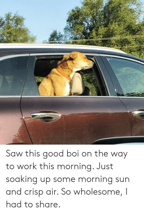 Saw, Work, and Good: Saw this good boi on the way to work this morning. Just soaking up some morning sun and crisp air. So wholesome, I had to share.
