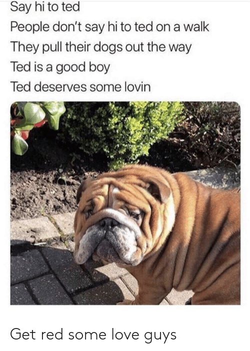 say hi: Say hi to ted  People don't say hi to ted on a walk  They pull their dogs out the way  Ted is a good boy  Ted deserves some lovin Get red some love guys