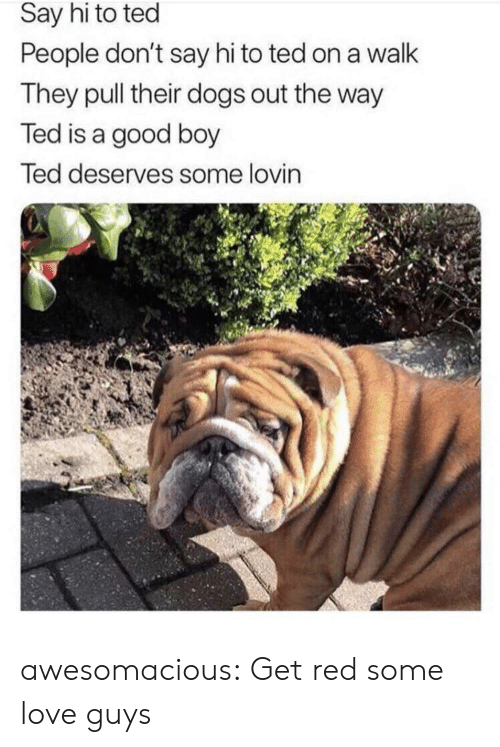 say hi: Say hi to ted  People don't say hi to ted on a walk  They pull their dogs out the way  Ted is a good boy  Ted deserves some lovin awesomacious:  Get red some love guys