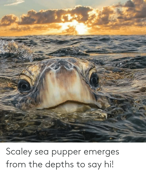 Hi: Scaley sea pupper emerges from the depths to say hi!