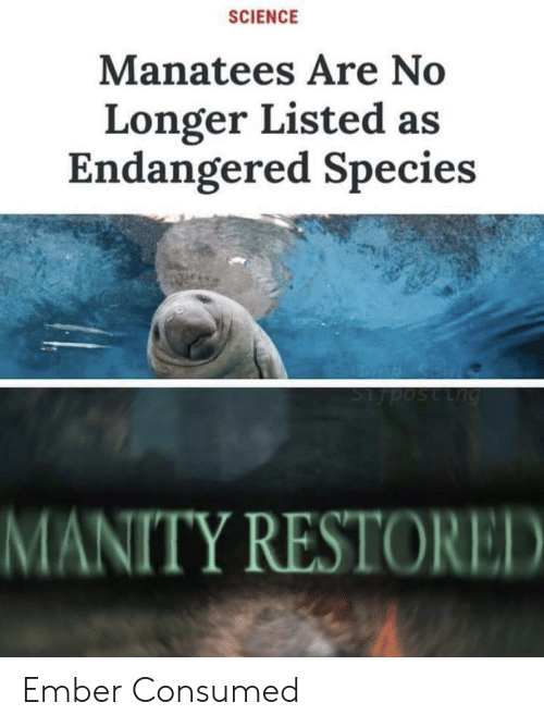 Consumed: SCIENCE  Manatees Are No  Longer Listed as  Endangered Species  Lng  MANITY RESTORED Ember Consumed
