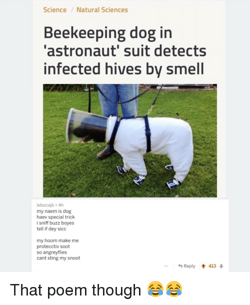 hives: Science/Natural Sciences  Beekeeping dog in  'astronaut' suit detects  infected hives by smell  lebocajb 4h  my naem is dog  haev special trick  i sniff buzz boyes  tell if dey sicc  my hoom make me  protecctiv soot  so angreyflies  cant sting my snoot  *Reply會413 That poem though 😂😂