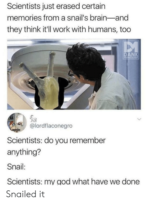 Snailed: Scientists just erased certain  memories from a snail's brain-and  they think itll work with humans, too  DANK  @lordflaconegro  Scientists: do you remember  anything?  Snail:  Scientists: my god what have we done Snailed it