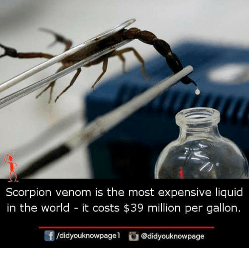Scorpion: Scorpion venom is the most expensive liquid  in the world - it costs $39 million per gallon.  f/didyouknowge didyouknowpage
