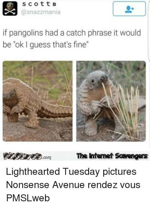 """Lighthearted: scottB  asnazzmania  if pangolins had a catch phrase it would  be""""ok I guess that's fine""""  PinsiyecomThe htemet Scavengers <p>Lighthearted Tuesday pictures  Nonsense Avenue rendez vous  PMSLweb </p>"""