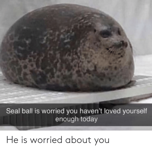 Seal, Today, and You: Seal ball is worried you haven't loved yourself  enough today He is worried about you