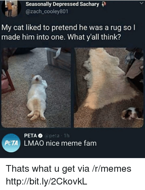 Fam, Lmao, and Meme: Seasonally Depressed Sachary 4)  @zach_cooley801  My cat liked to pretend he was a rug so l  made him into one. What y'all think?  @peta 1h  PeTA LMAO nice meme fam Thats what u get via /r/memes http://bit.ly/2CkovkL