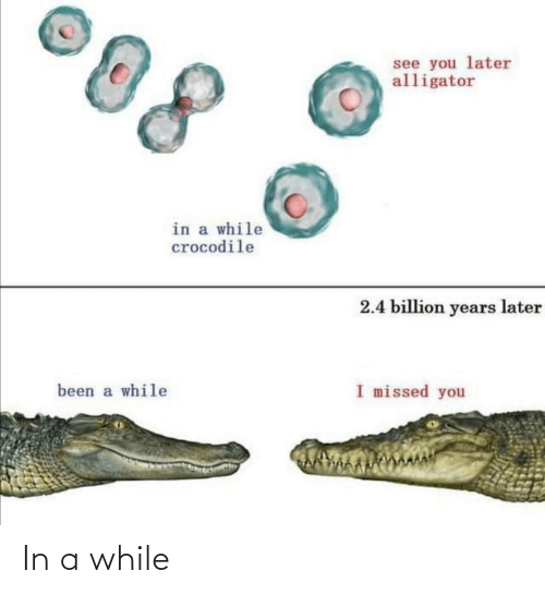 Alligator: see you later  alligator  in a while  crocodile  2.4 billion years later  I missed you  been a while In a while