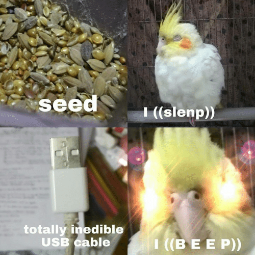 Usb, Cable, and Seed: seed  I ((slenp))  totally inedible  USB Cable