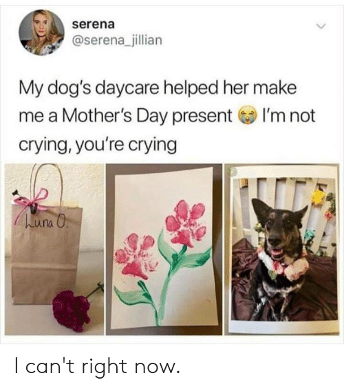 Crying, Dank, and Dogs: serena  @serena_jillian  My dog's daycare helped her make  me a Mother's Day presentI'm not  crying, you're crying I can't right now.