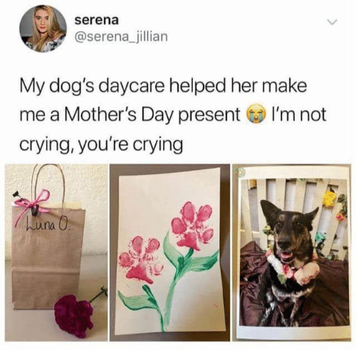 Crying, Dogs, and Mother's Day: serena  @serena_jillian  My dog's daycare helped her make  me a Mother's Day present I'm not  crying, you're crying  huna O