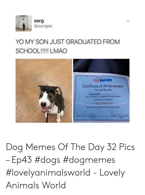 Petsmart: serg  @surrgee  YO MY SON JUST GRADUATED FROM  PETSMART  Certificate of Achievement  This certifies that  oase  has successfully completed all requirements  necessary to complete  Puppy Education  Sponsored By the PecSmart Pet Training Program  l20 2l  Date Dog Memes Of The Day 32 Pics – Ep43 #dogs #dogmemes #lovelyanimalsworld - Lovely Animals World