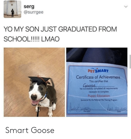 Petsmart: serg  @surrgee  YO MY SON JUST GRADUATED FROM  SCHOOL!!!!! LMAO  PETSMART  Certificate of Achievement  This certifies that  Goose  has successfully completed all requirements  necessary to complete  Puppy Education  Sponsored By the PetSmart Pet Training Program  Anil 20 201  Instructor  Date Smart Goose