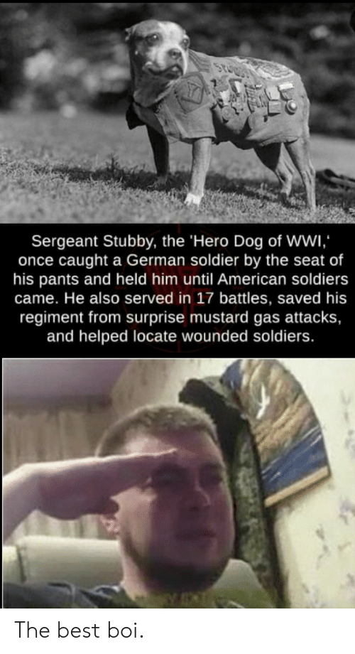 Soldiers, American, and Best: Sergeant Stubby, the 'Hero Dog of Wwi  once caught a German soldier by the seat of  his pants and held him until American soldiers  came. He also served in 17 battles, saved his  regiment from surprise mustard gas attacks,  and helped locate wounded soldiers. The best boi.