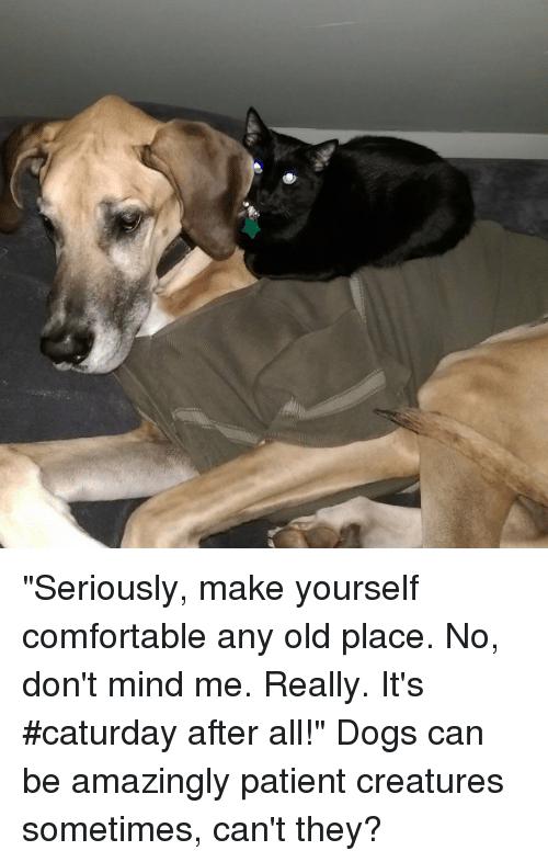 Seriously make yourself comfortable any old place no dont mind me caturday comfortable and dogs seriously make yourself comfortable any old place solutioingenieria Image collections