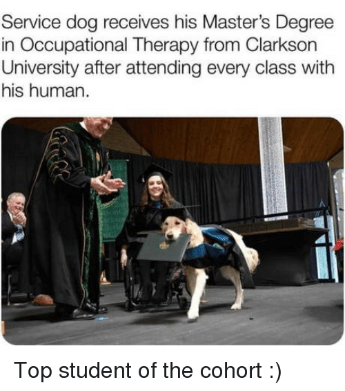 Attending: Service dog receives his Master's Degree  in Occupational Therapy from Clarkson  University after attending every class with  his human. Top student of the cohort :)