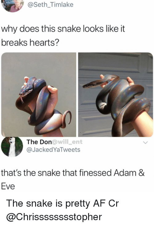 Af, Memes, and Hearts: @Seth_Timlake  why does this snake looks like it  breaks hearts?  The Don  @JackedYaTweets  owill_ent  that's the snake that finessed Adam &  Eve The snake is pretty AF Cr @Chrisssssssstopher