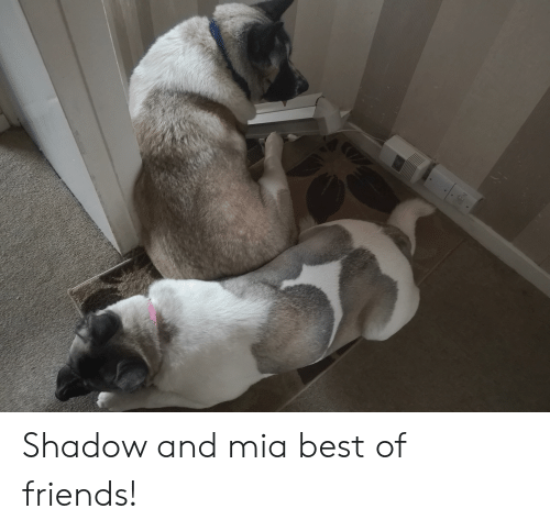 Friends, Best, and Best Of: Shadow and mia best of friends!