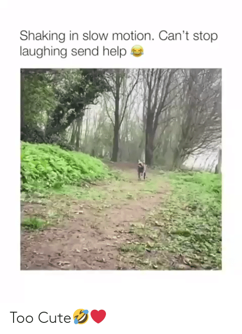 Slow Motion: Shaking in slow motion. Can't stop  laughing send help Too Cute🤣❤️