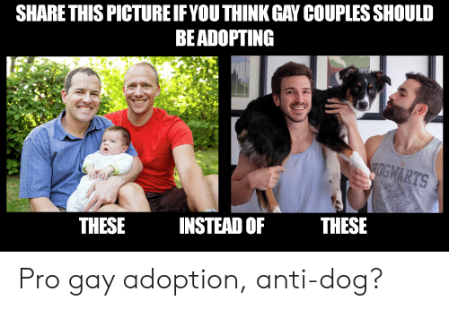 Pro, Forwardsfromgrandma, and Anti: SHARE THIS PICTURE IF YOU THINK GAY COUPLES SHOULD  BEADOPTING  HOGWARTS  THESE  INSTEAD OF  THESE Pro gay adoption, anti-dog?