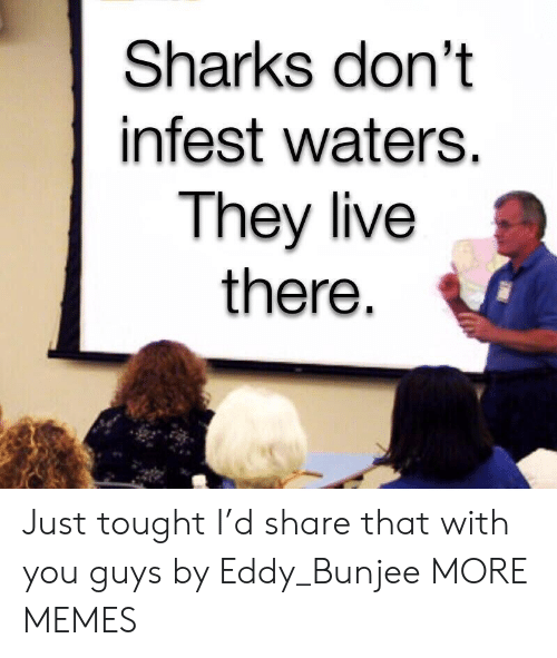 Dank, Memes, and Target: Sharks don't  infest waters.  They live  there Just tought I'd share that with you guys by Eddy_Bunjee MORE MEMES