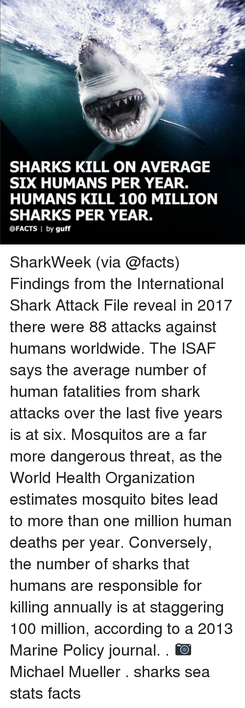 guff: SHARKS KILL ON AVERAGE  SIX HUMANS PER YEAR.  HUMANS KILL 100 MILLION  SHARKS PER YEAR.  @FACTS I by guff SharkWeek (via @facts) Findings from the International Shark Attack File reveal in 2017 there were 88 attacks against humans worldwide. The ISAF says the average number of human fatalities from shark attacks over the last five years is at six. Mosquitos are a far more dangerous threat, as the World Health Organization estimates mosquito bites lead to more than one million human deaths per year. Conversely, the number of sharks that humans are responsible for killing annually is at staggering 100 million, according to a 2013 Marine Policy journal. . 📷 Michael Mueller . sharks sea stats facts