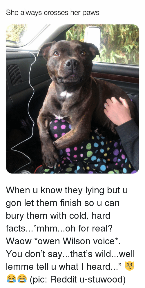 """U What: She always crosses her paws When u know they lying but u gon let them finish so u can bury them with cold, hard facts...""""mhm...oh for real? Waow *owen Wilson voice*. You don't say...that's wild...well lemme tell u what I heard..."""" 😼😂😂 (pic: Reddit u-stuwood)"""