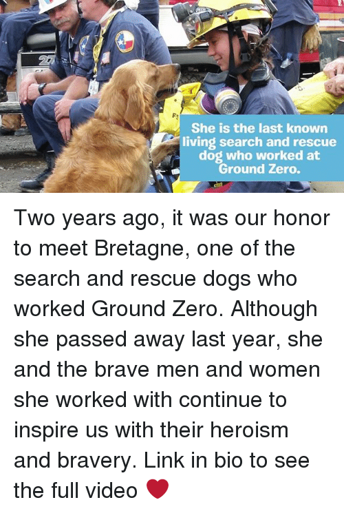 Dogs, Memes, and Zero: She is the last known  living search and rescue  dog who worked at  Ground Zero. Two years ago, it was our honor to meet Bretagne, one of the search and rescue dogs who worked Ground Zero. Although she passed away last year, she and the brave men and women she worked with continue to inspire us with their heroism and bravery. Link in bio to see the full video ❤️