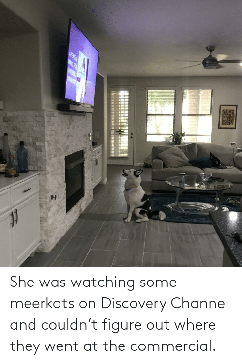 discovery: She was watching some meerkats on Discovery Channel and couldn't figure out where they went at the commercial.