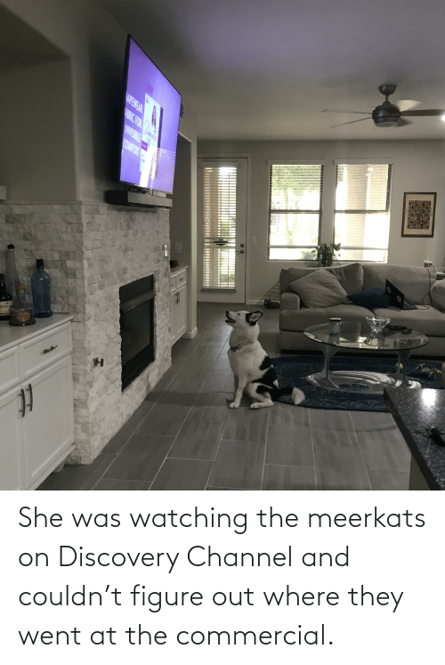 discovery: She was watching the meerkats on Discovery Channel and couldn't figure out where they went at the commercial.