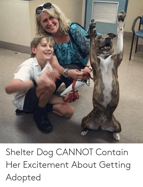 excitement: Shelter Dog CANNOT Contain Her Excitement About Getting Adopted